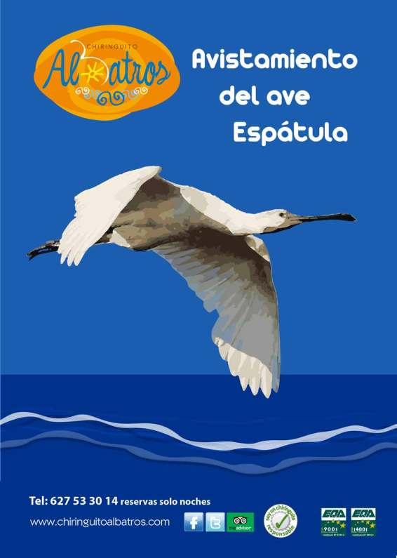 Cartel-avistamiento-del-ave,-espátula2-01